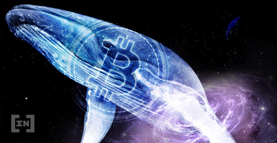 BTC Bitcoin Hodl Whale