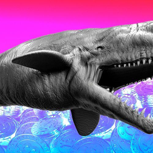 bic_btc_whale-500x500.jpg.optimal.jpg